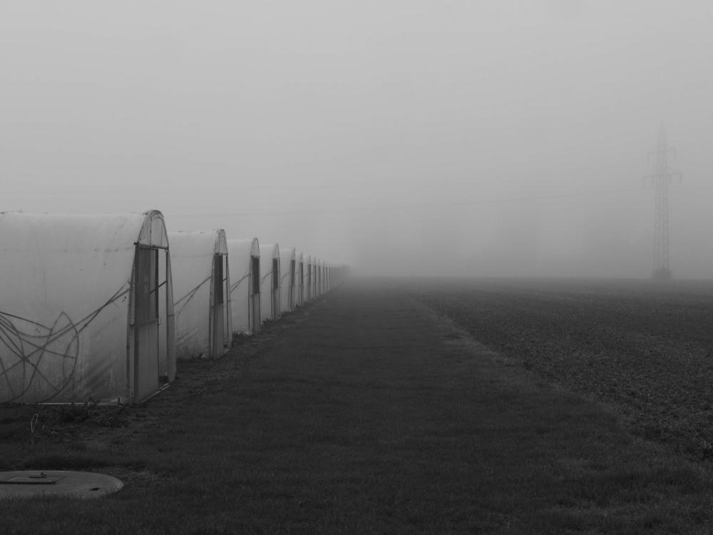 Das s/w-Foto zeigt auf der linken Seite eine Reihe von Gewächshäusern mit offenen Türen, wobei die Reihe irgendwo im Nebel verschwindet. Rechs sieht man, fast vom Nebel verborgen, einen Hochspannungsmasten