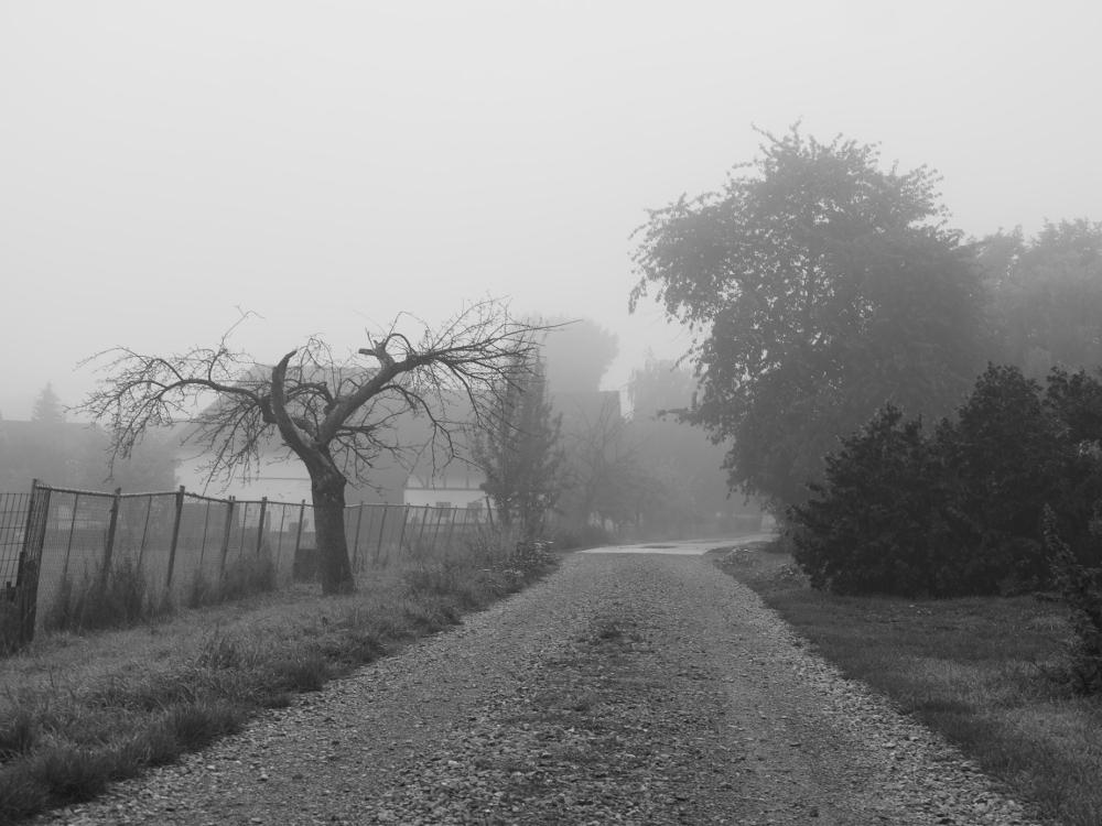 Der Ortseingang von Roklum von einem FEldweg aus gesehen im Nebel, rechts ist eine Pferdeweide, man sieht Bäume und Büsche.