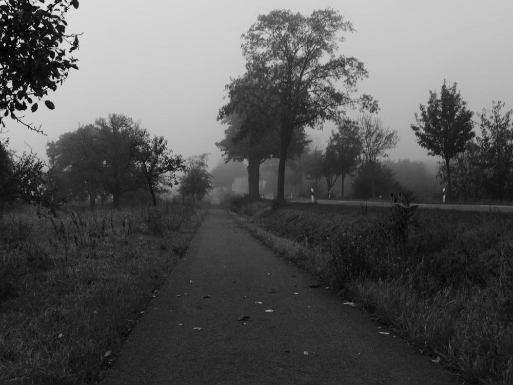 Dasa s/w-Foto zeigt eienn Radweg und daneben, etwas höher liegend, die Straße. Rechts und Links der Straße stehen Bäume, in der Ferne sieht man die Scheinwerfer von einem Auto.