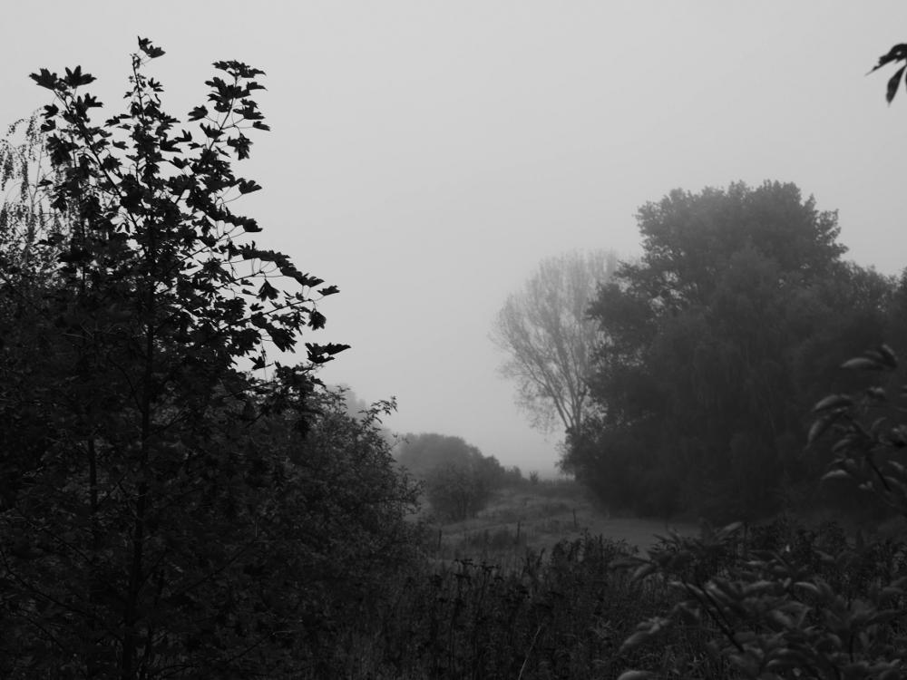 Eine s/w-Landschaftsaufnahme bei leichtem Nebel, der Blick geht zwischen Bäumen und Büschen durch und verschwindet im Nebel