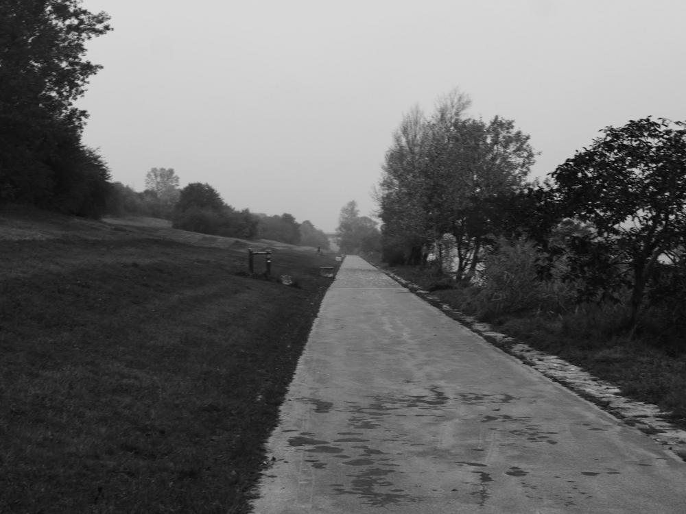 Das s/w-Foto zeigt einen Fußweg auf der Donauinsel, zwischen dem Weg und der Donau stehen Bäume