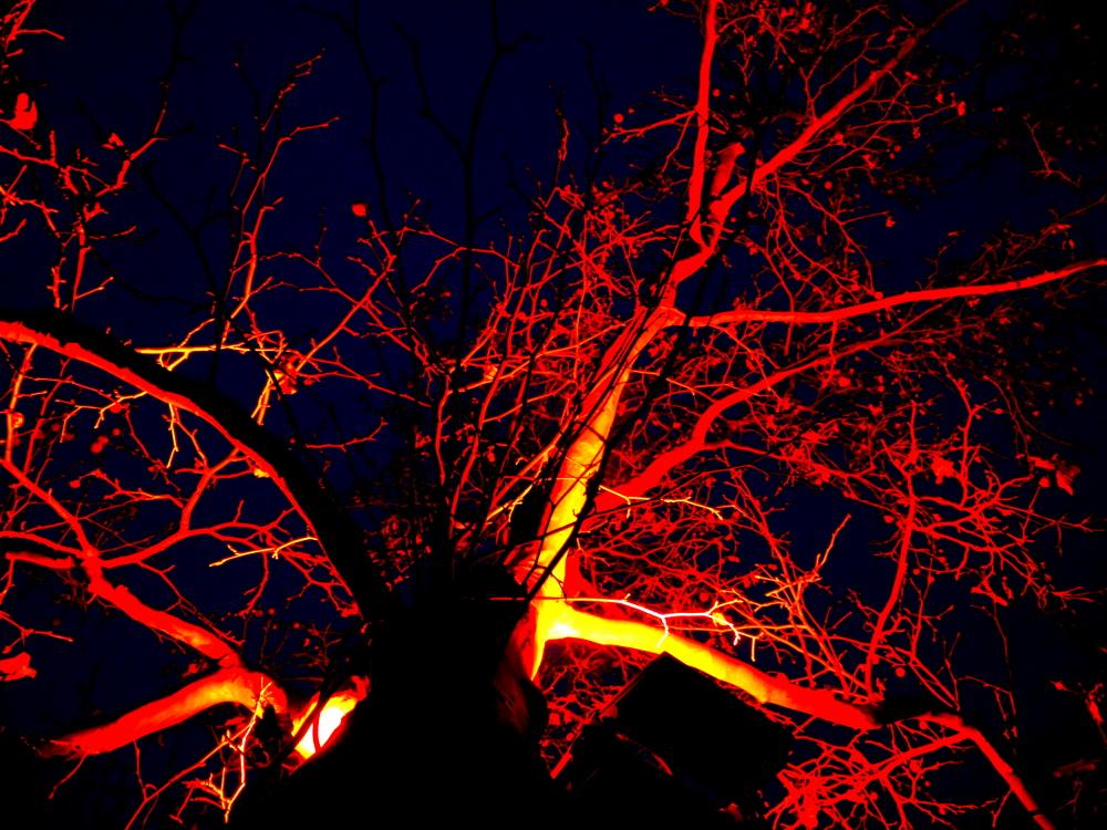 Das Foto zeigt das rot angestrahlte Geäst eines kahlen Baums gegen den schwarzen Hintergrund