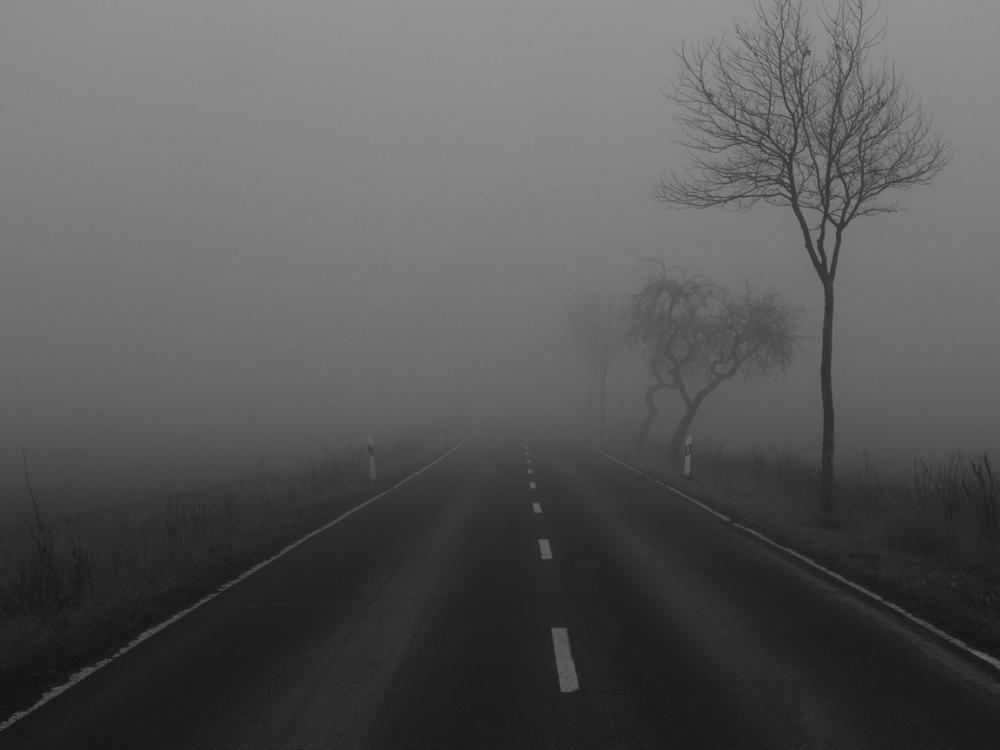 Dasa s/w-Foto zeigt eine Straße, die im Nebel verschwindet. Auf der rechten Straßenseite stehen Bäume
