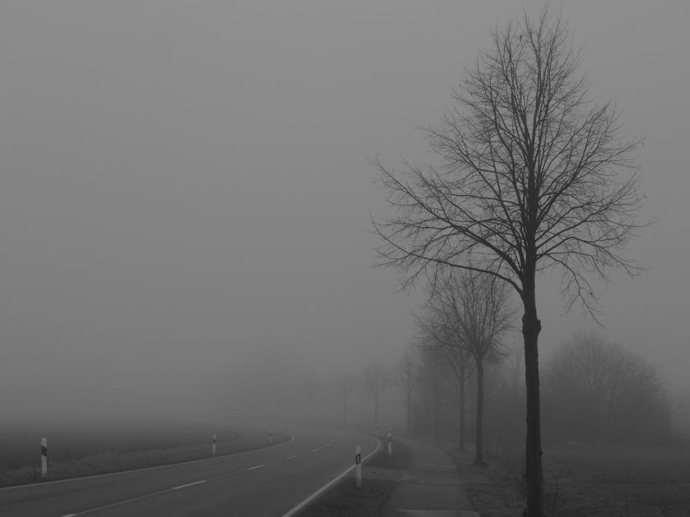 Das s/w-Foto zeigt eine Straße, die eine Kurve nach Links macht und dann im Nebel verschwindet. Auf der Rechten Seite ist ein Radweg und daneben stehen Bäume