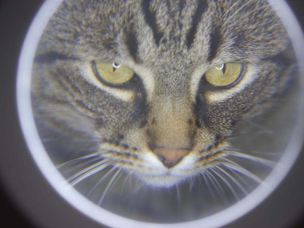Das Foto zeigt das Gesicht eines grau-schwarz getigerten Katers durch die Lupe einer Lampe mit Lupe.