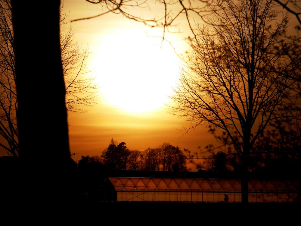 Das Foto zeigt einen Sonnenuntergang zwischen zwei Bäumen. Unter der Sonne steht ein Gewächshaus, man kann erahnen, das in dem Gewächshaus jemand arbeitet.