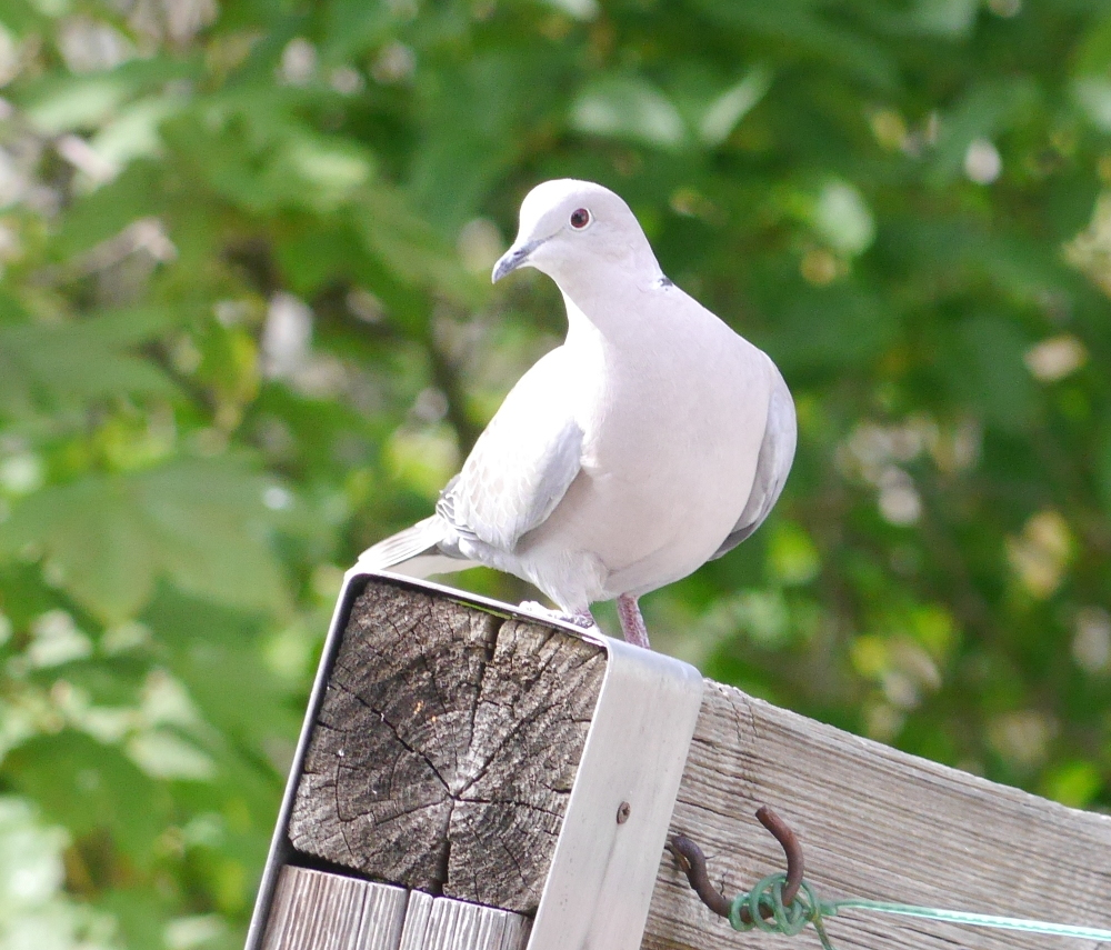 Ein weißer Vogel auf einem sehr krummen Pfosten.