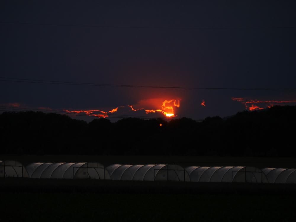 Es ist ein Sonnenuntergangs-Foto, allerdings findet der Sonneuntergang hinter dichten Wolken statt so das mann nur einige wenige orangene Flecken und Spalten sieht. Unterhalb der Sonne stehen Gewächshäuser und man kann die Seile einer Freileitung erkennen.