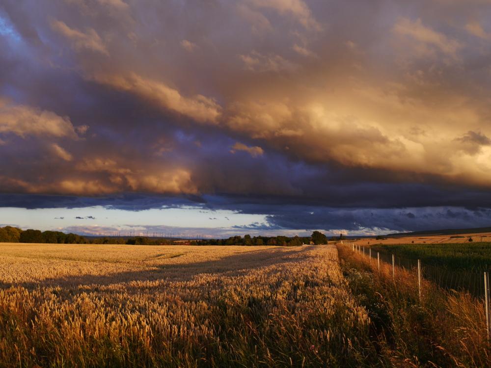 Das Foto zeigt eine Landschaftsaufnahme. Am Himmel sind dicke, dunkle Regenwolken, von Rechts läuft ein Zaun in Richtung Horizont, Links sieht man ein Kornfeld. Im Hintergrund kann man ein Dorf und einen Windpark sehen.