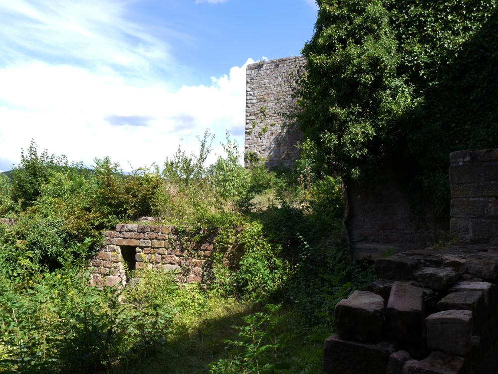 Das Foto zeigt die teilweise überwucherten Mauern der Burgruine der Wolfsburg.