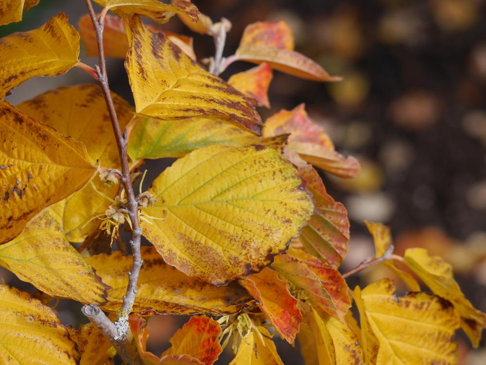 Dasa Foto zeigt gelbe, gelb-braune und rötliche Blätter