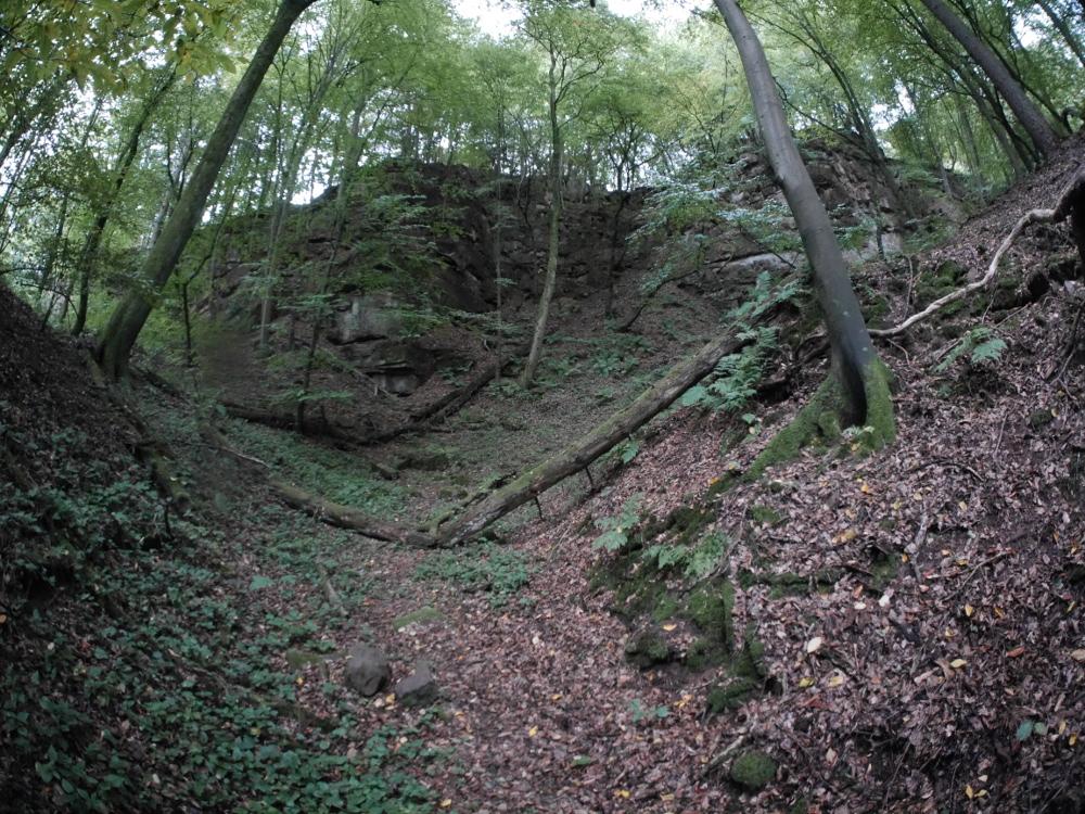 Eine Landschaftsaufnahme in einer kleinen Schlucht im Wald, man sieht auch liegende Bäume und Laub usw. Im Hintergrund auch Fels.