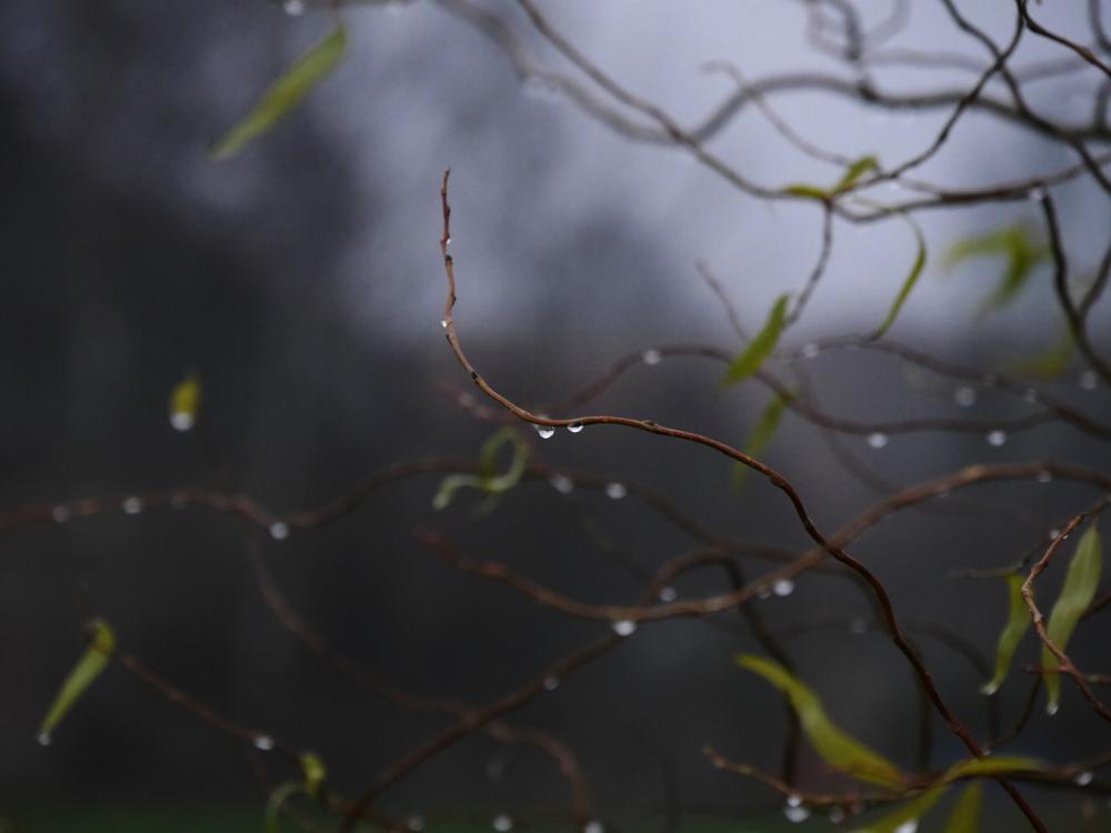 Ein sehr experimentelles Foto von Wassertropfen, die an Ästen hängen. Teilweise sind auch noch einzelne Blätter an den Ästen und teile des Bildes sind unscharf.