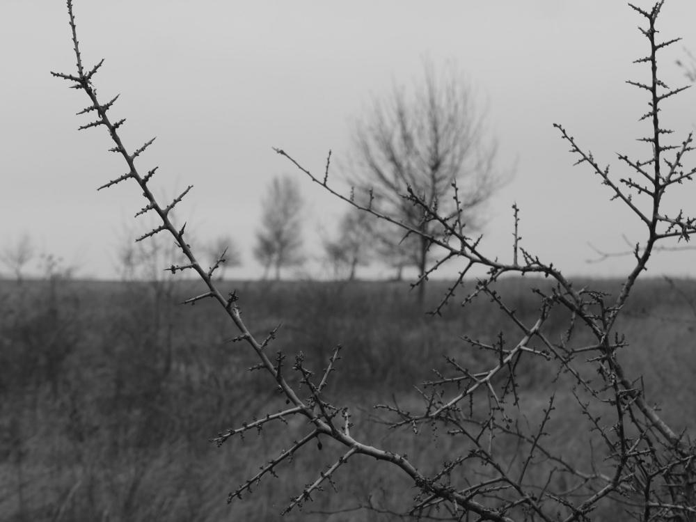 Eine s/w-Landschaftsaufnahme. Scharf sind Ästen im Vordergrund, die Bäume im Hintergrund verschwinden in der Unschärfe. Es ist trübes Januar-Wetter