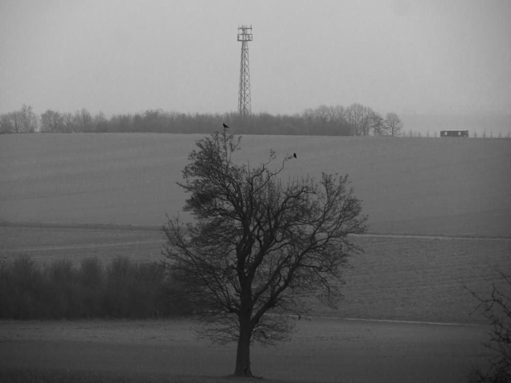 Eine s/w-Landschaftsaufnahme. Man sieht einen Baum ohne Blätter, wo auf den oberen Ästen zwei Vögel sitzen. In gerader Linie hinter dem Baum ist ein großer Mobilfunkmast. Es ist trüb und die Landschaft verschwindet im grauen.