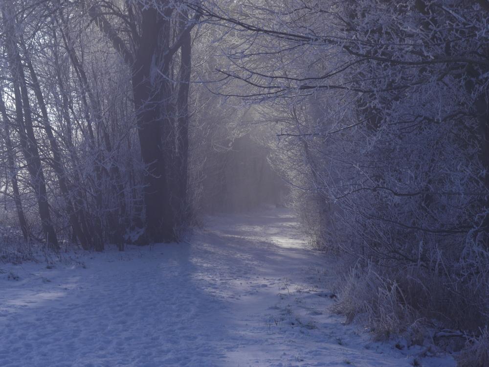 """Ein verschneiter Weg, der von Bäumen und Büschen umgeben ist. Es fällt die Sonne durch die kahlen Bäume, aber es gibt auch ein wenig Dunst der zu einem sehr """"weichen"""" Bild führt."""