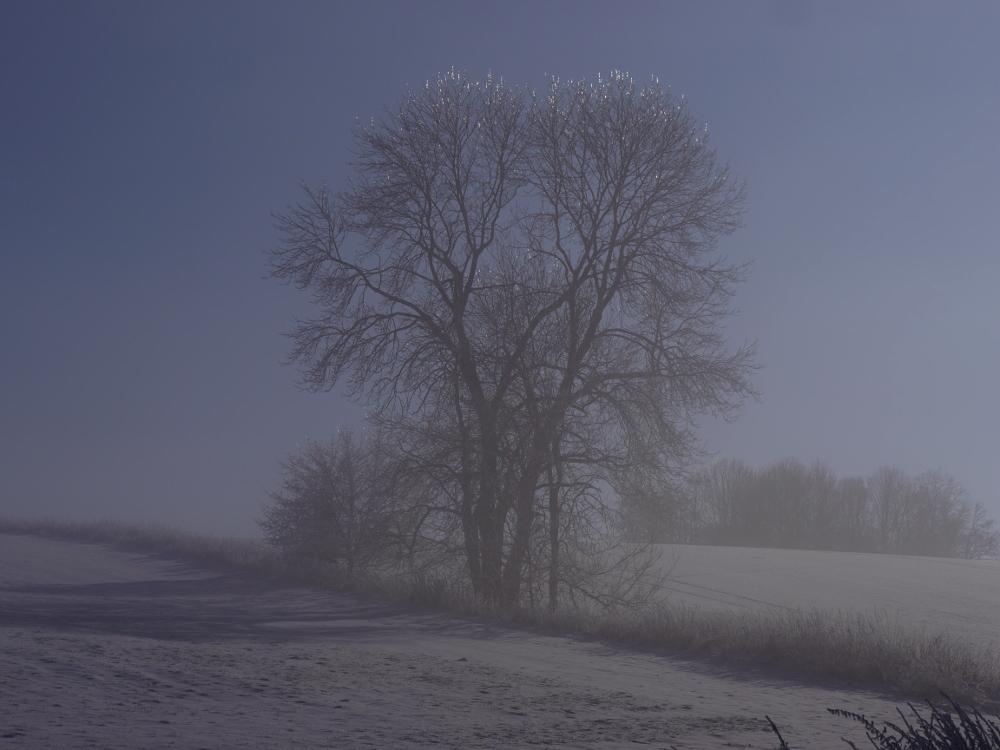 Bäume und Büsche die kahl zwischen verschneiten Feldern stehen, im Hintergrund weitere Bäume. Die Sonne scheint, aber es ist noch ein wenig Dunst vorhanden, der sich über alels gelegt hat.