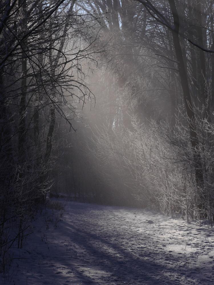 Die Sonne fällt durch die Bäume auf den beiden Seiten eines verschneten Wegs, es ist noch leichter Dunst vorhanden der das Licht streut und eine fast mysthische Atmosphäre schafft.