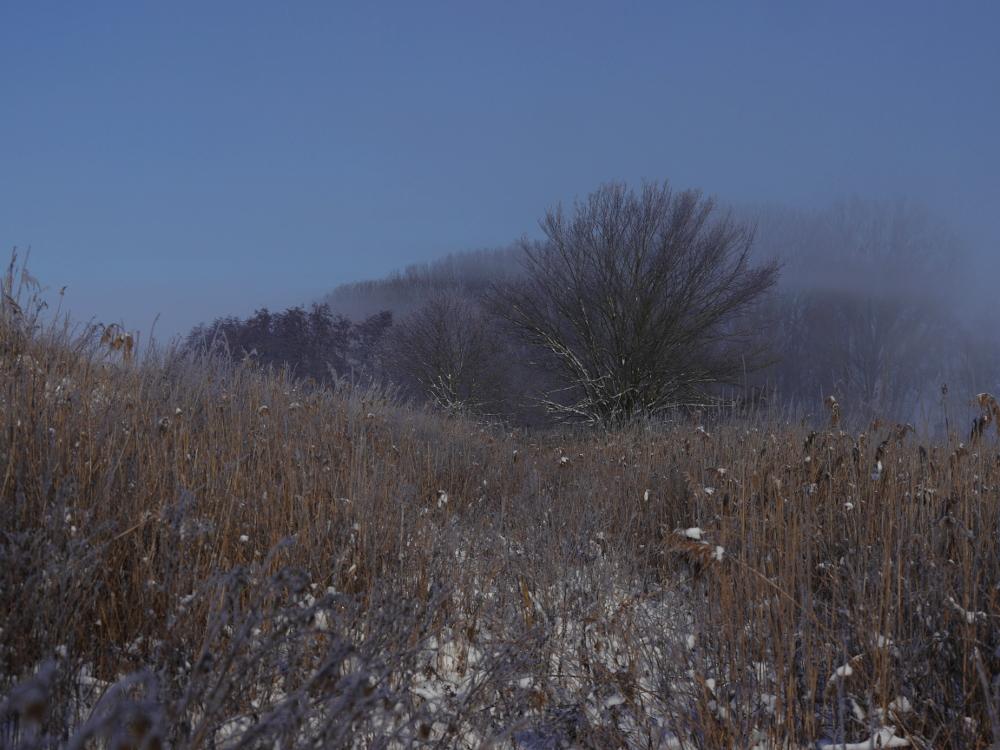 Eine Landschaftsaufnahme im Winter bei kahlen Feldern. Man sieht Bäume und hohe Gräser, die Sonne scheint- Aber es hat sich auch ein wenig Dunst/Nebel gehalten, in dem die Bäume verschwinden.