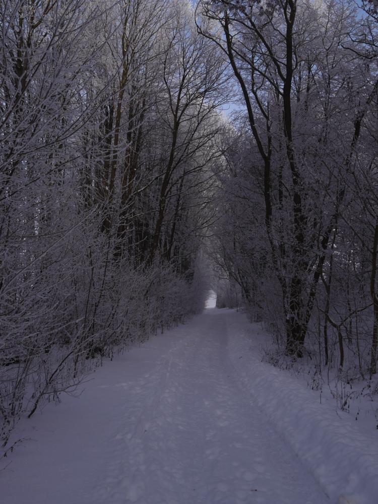 Ein Wanderweg im Winter bei Schnee, rechts und links sind vom Schnee bedeckte Bäume