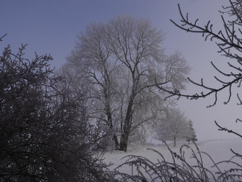Ds Foto zeigt kahle Bäume bei Schnee im Winter.