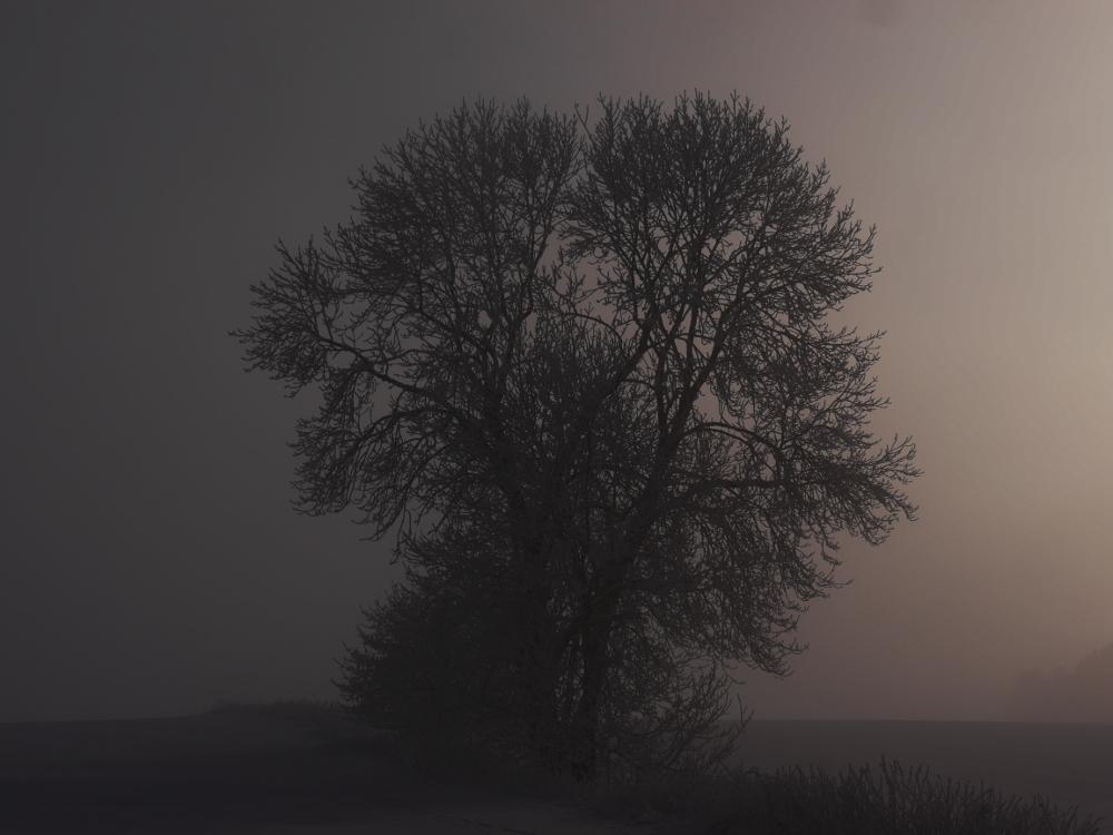 Ds Foto zeigt einen Baum bei Schnee, Nebel und ein wenig Sonne auf der rechten Seite. Das FOto ist ziemlich dunkel, dadurch wirkt der Baum mehr wie eine Silouette.