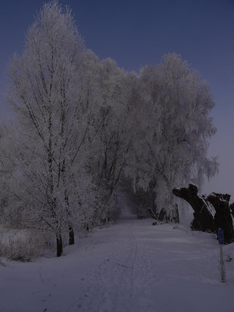 Ds Bild zeigt einen Wanderweg bei Schnee, die Bäume sind weiß vom Schnee und man kann den blauen Himmel erahnen