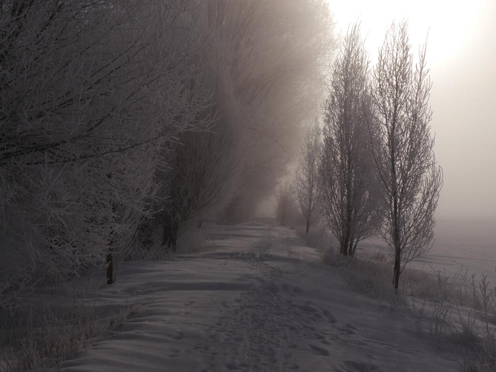 Ein Wanderweg bei Schnee und Nebel und Sonne, die Bäume sind weiß vom Schnee und auf dem Weg sind Schneewehen