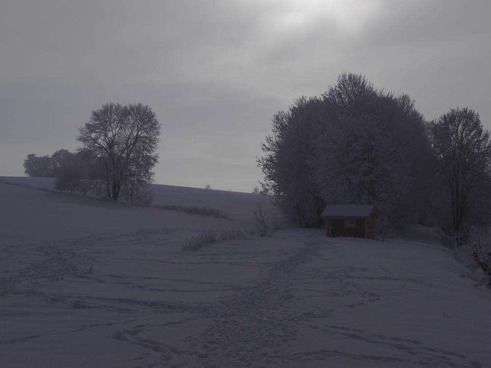 Ein Landschaftsfoto bei Schnee, man sieht einen Trampelpfad im Schnee, Bäume und ein Insektenhotel.