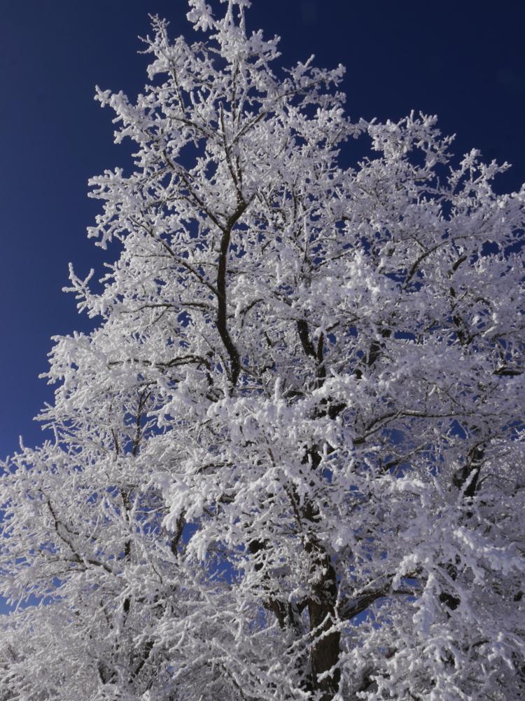 Ein Schneebedeckter Baum im Winter bei blauem Himmel und Sonnenschein