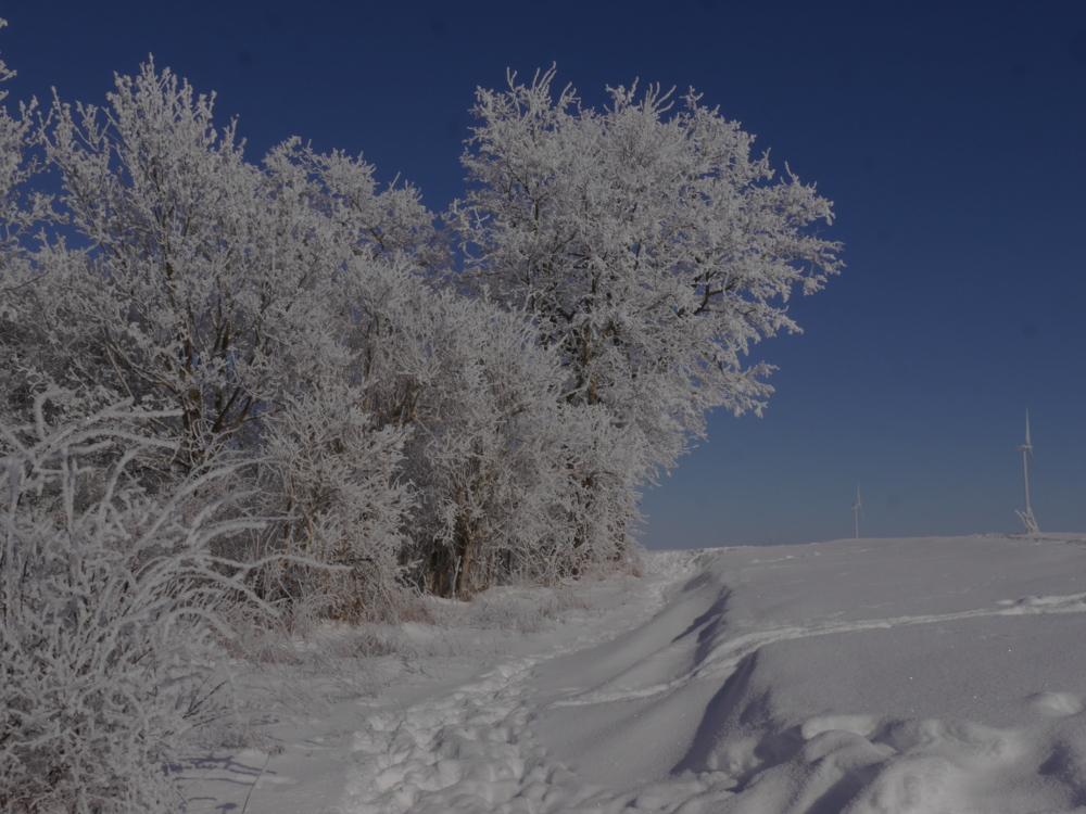 Eine Landschaftsaufnahme im Winter, auf der linken Siete sind schneebedeckte Bäume, Rechts freie Landschaft mit Windrädern am Horizing. Man sieht Schneewehen und ein Trampfelpfad der den Berg hinauffäuhrt.
