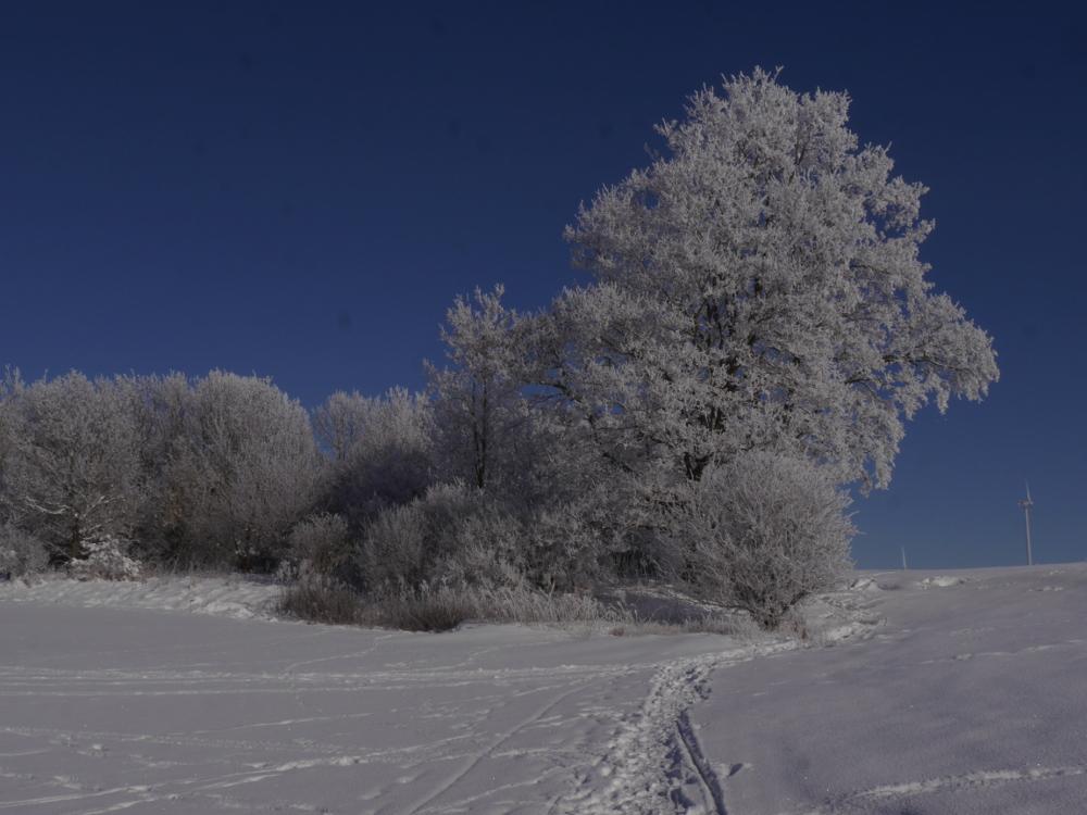 Das Foto zeigt eine Winterlandschaft bei Schnee, blauem Himmel und Sonnenschein. Es sind Bäume zu sehen, die mit Schnee bedeckt sind, der Boden ist auch tief mit Schnee bedeckt und zeigt Spuren von Mensch und Tier. Im Hintergrund sind Windräder zu sehen.