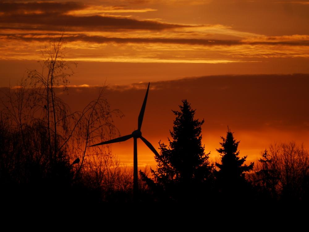 Eine Landschaftsaufnahme von einem Sonnenuntergang, kurz bevor die Sonne aufgeht. Der Himmel ist Orange glühend, man sieht zwischen den Bäumen ein Windrad und in einem kahlen Baum Vögel.