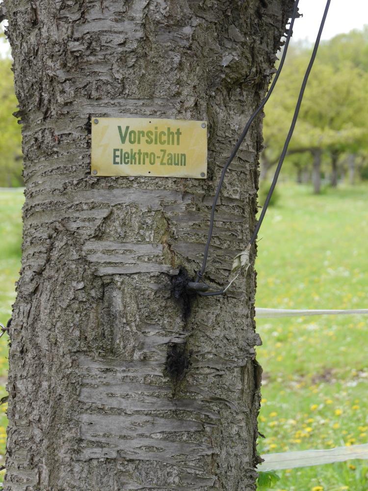"""Ein Baum, an den ein altes, inzwischen ausgeblichenes Schild mit der Aufschrift """"Vorsicht Elektro-Zaun"""" genagelt wurde. Dazu sieht man noch Reste vom alten Elektrozaun."""
