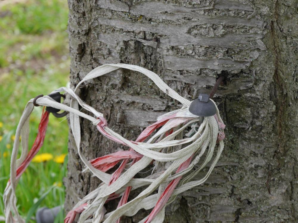 Alte isolatoren von einem Elektrozaun, die in einen Baum genagelt wurden. Drum ist ein Knäul aus Rote-Weißem Absperrband und Sperrband von einem Weidezahn gewickelt.
