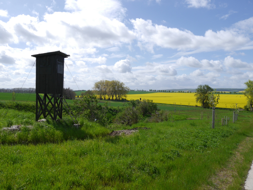 Eine Landschaftsaufnahme in einer ländlichen Gegend, links ist ein Hochsitz, drum Grasflächen und grüne Felder. Weiter hinten kommt leuchtend gelbes Rapsfeld, und im Hintergrund sieht man niedrige Berge.