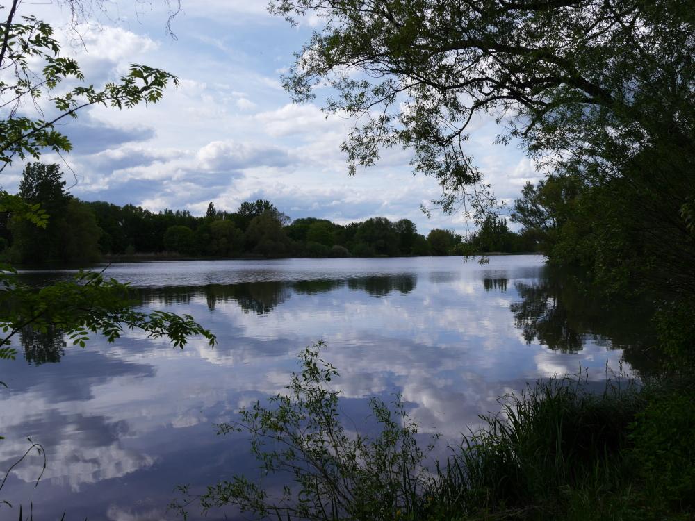 Eine Landschaftsaufnahme an einem See, am Ufer stehen Bäume und am Himmel sind Wolken. Das Foto ist zwischen Bäumen aufgrnommen. Das Wasser ist ziemlich ruhig und so spiegeln sich die Bäume und die Wolken im See.