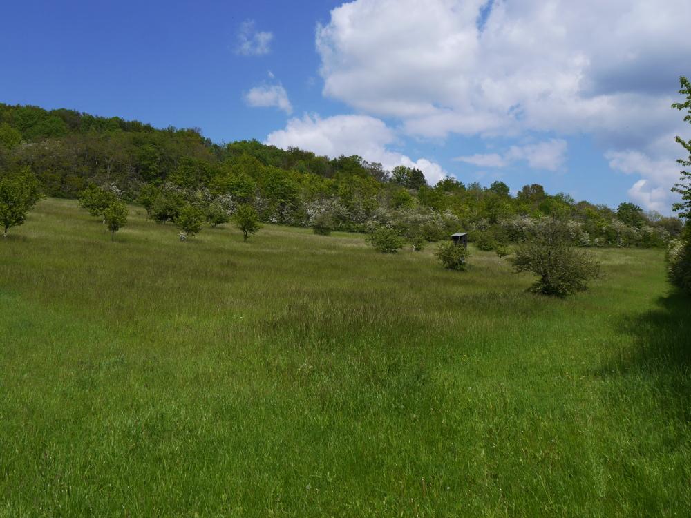 Ein Landschaftsfoto, man sieht im Vordergrund eine Wiese mit sehr hohem Gras, dahinter einzelne Bäume die dann in einen Wald übergehen. Das Foto ist am Fuß eines Bergs aufgenommen, im oberen Bildteil erkennt man blauen Himmel mit weißen Wolken. Zwischen den Bäumen steht im linken drittel des Bildes ein Hochsitz.