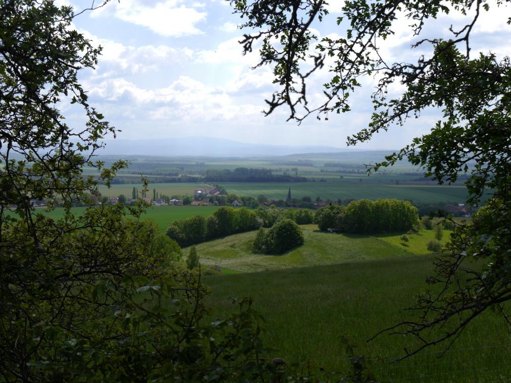 Eine Landschaftsaufnahme, die zwischen und unter Bäumen aufgenommen wurde, man blickt durch ein großes Loch zwischen den Ästen von einem Berg hinuter auf Wiesen, Bäume, Felder, und ien Dorf. Im Hintergrund sind weitere Felder und Bäume und am Horizont sind schon Berge (der Harz) zu erkennen.