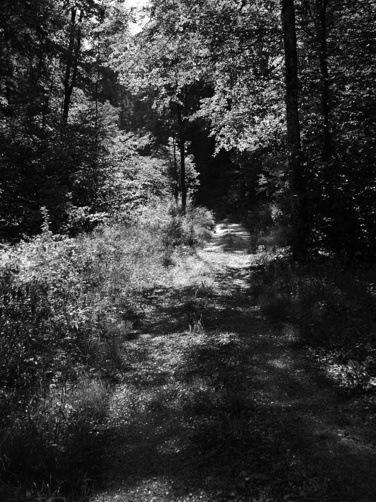 Ein schwarz-weiß-Foto von einem Waldweg, durch die Lücken in den Bäumen fällt das Licht. Der Kontrast ist sehr stark, dadurch sind einige Bildabschnitte sehr hell, andere sehr dunkel, was dem Bild eine dramatische Stimmung verleit.