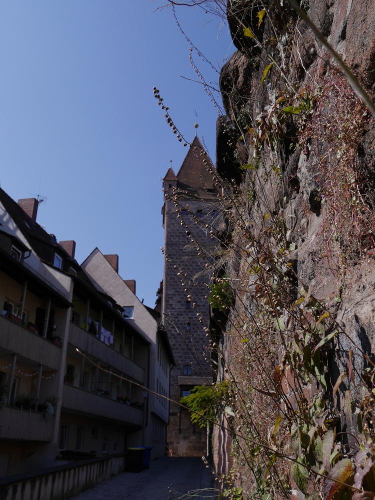 Ein experimentelles Foto an der Nürnberger Stadtnmauer. Die Kamera ist dicht an der Mauer dran, scharf sind Pflanzen abgebildet die aus der Mauer wachsen und weiter hinten sieht man einen Turm in der Stadtmauer, gegenüber von der Stadtmauer sind relativ moderne Wohnhäuser